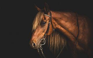 Обои на телефон фотография, приятные, лошадь, лошади, коричневые, животные, арт, caballos, art