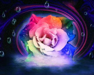 Обои на телефон капли дождя, цветы, радуга, красочные, абстрактные