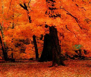 Обои на телефон природа, прекрасные, осень, оранжевые, листья, дерево