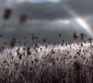 Обои на телефон шторм, растения, радуга, природа, облака