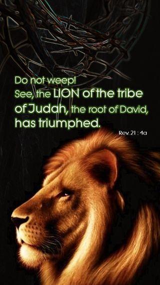 Обои на телефон библия, христианские, лев, lion of judah