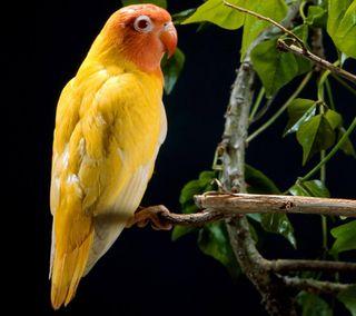 Обои на телефон попугай, птицы, животные, желтые