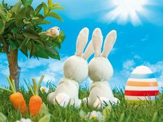 Обои на телефон пасхальные, счастливые, случаи, кролик, easter bunny
