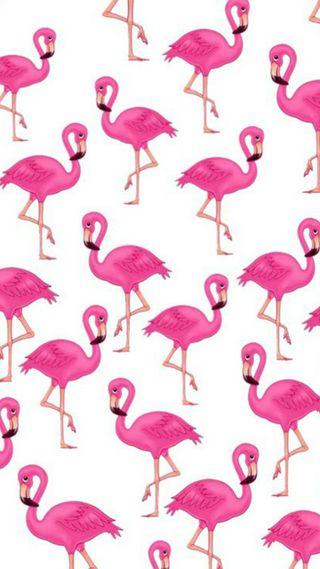 Обои на телефон узоры, розовые, птицы, животные, белые, flamingo