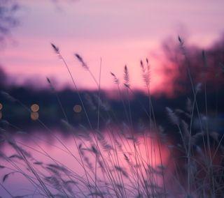 Обои на телефон макро, природа, пейзаж, закат