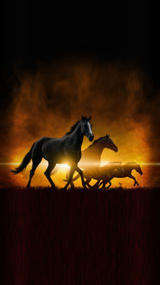 Обои на телефон лошади, красота, закат, бег, running horses