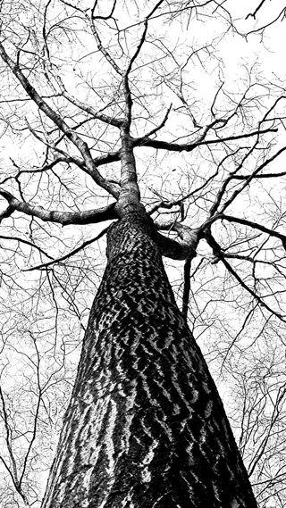 Обои на телефон айфон 5, классика, дерево, ветви, айфон 6, classic branches, brahces