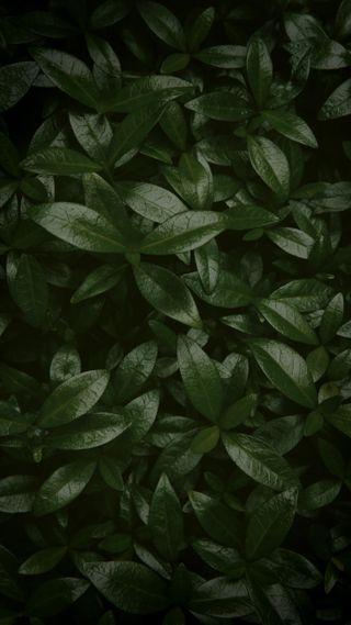 Обои на телефон растения, чистые, фото, простые, листья, зеленые, блестящие, hd, green plants