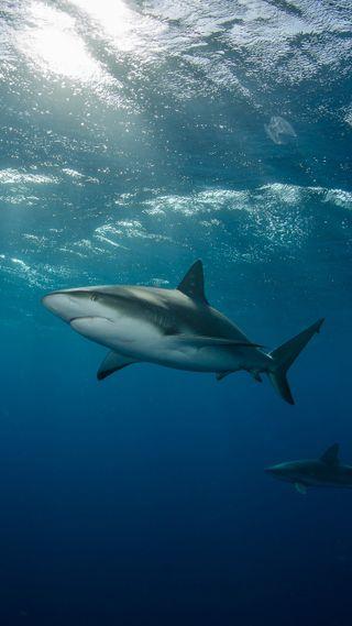 Обои на телефон хищник, подводные, акула, рыба