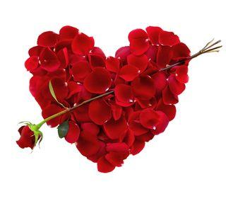 Обои на телефон лепестки, сердце, розы, любовь, petal heart, love