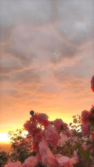 Обои на телефон эстетические, цветы, розовые