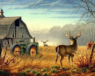 Обои на телефон ruck, природа, пейзаж, картина, поле, олень, ферма, коттедж