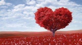 Обои на телефон милые, любовь, красные, естественные, te amo, bonito