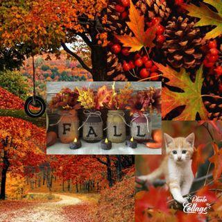 Обои на телефон осень, листья, кошки