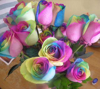 Обои на телефон чувства, ты, розы, милые, любовь, love