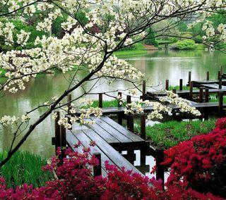 Обои на телефон сад, цветы, пруд, дерево, вода