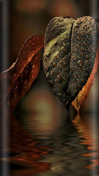 Обои на телефон коричневые, стиль, оранжевые, листья, капли, дождь, грани, s7, edge style
