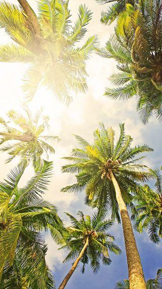 Обои на телефон солнечный свет, пальмы, небо, деревья