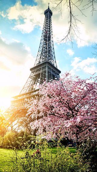 Обои на телефон цвести, франция, париж, весна, башня