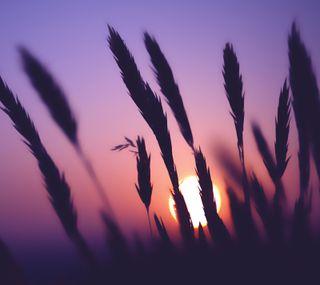 Обои на телефон восход, природа, corn