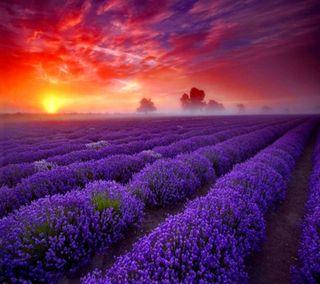 Обои на телефон трава, солнце, природа, прекрасные, пейзаж, небо, закат