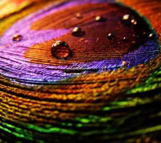 Обои на телефон цветные, павлин, радуга, перо, красочные, капли воды, дождь, вода