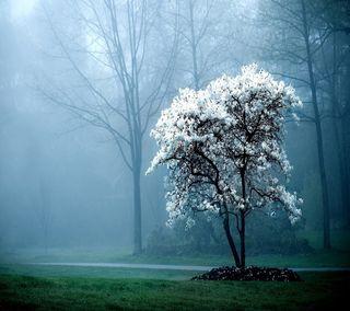 Обои на телефон туман, природа, дерево, белые