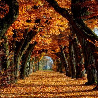 Обои на телефон хэллоуин, фон, сезон, осень, оранжевые, листья, деревья, hd, fall background