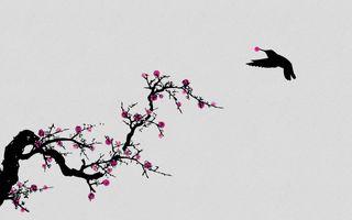 Обои на телефон расцветает, вишня, иллюстрации, весна, андроид, cherryblossoms, cherry blossoms, android