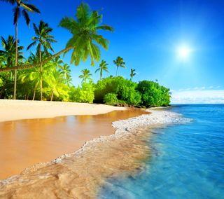 Обои на телефон пальмы, тропические, солнце, море, лето, берег, tropical coast