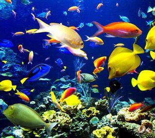 Обои на телефон рыби, подводные, природа, животные