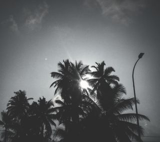 Обои на телефон черно белые, шри ланка, черные, солнце, облака, небо, деревья, дерево, белые, coconuttrees, coconut, black and white tree