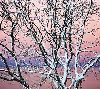 Обои на телефон восход, снег, розовые, природа, линии, зима, дерево, ветви
