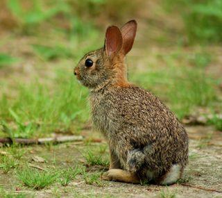 Обои на телефон кролики, природа, милые, кролик, животные