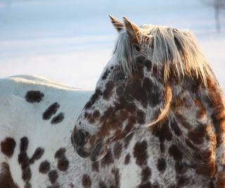 Обои на телефон питомцы, лошади, животные, pets and animals
