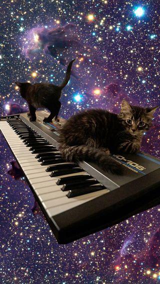 Обои на телефон коты, музыка, кошки, клавиатура, synth, spacecats, kitties, cats on keyboard