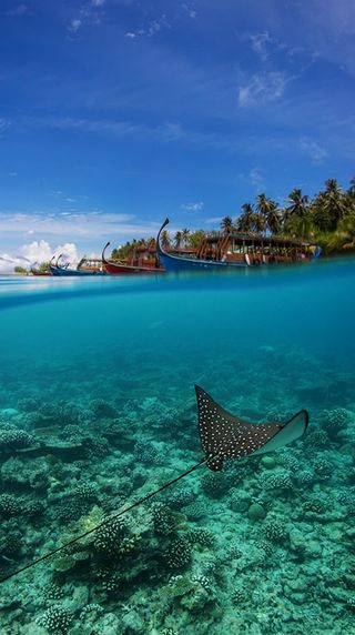 Обои на телефон подводные, синие, природа, небо, море, жизнь