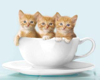 Обои на телефон приятные, животные, cattuccino, animal nice