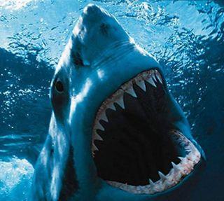 Обои на телефон акула, ajkula