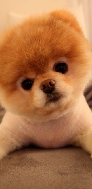 Обои на телефон коричневые, черные, собаки, прекрасные, милые, малыш, глаза, белые, baby dog, 4k