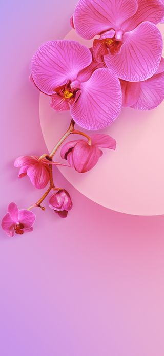 Обои на телефон сяоми, орхидея, ми, xiaomi mi 9