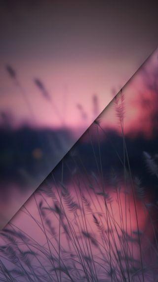 Обои на телефон стекло, темные, пейзаж, foxtails