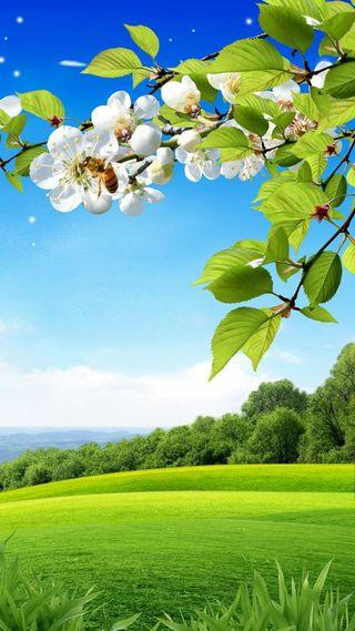 Обои на телефон новый, природа, небо, зеленые, горячий, горы, hd