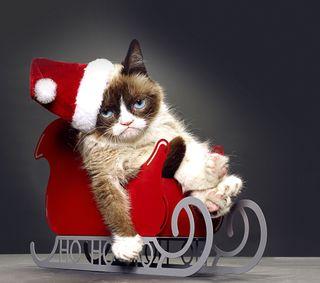 Обои на телефон рождество, кошки, yule, grumpy xmas, grumpy cat