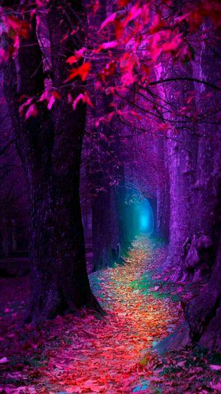 Обои на телефон дерево, фиолетовые, синие, сезон, свет, розовые, осень, листья
