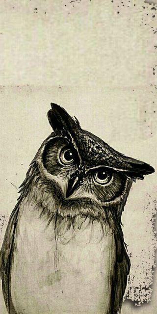 Обои на телефон сова, птицы, забавные