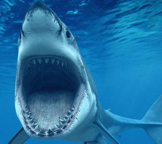 Обои на телефон акула, thetjh, jeratj