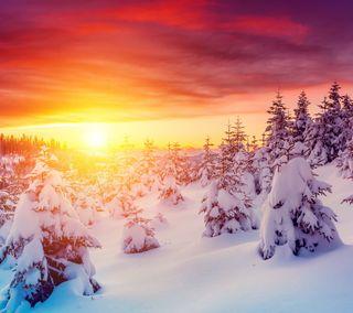 Обои на телефон солнце, снег, природа, пейзаж, зима, закат, ель, деревья, белые, snow white, nature landscape, fir trees