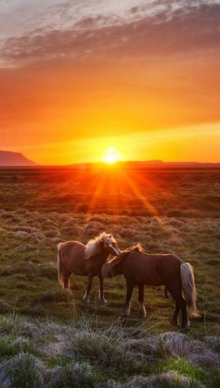 Обои на телефон лошади, природа, закат