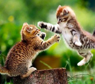 Обои на телефон коты, бой